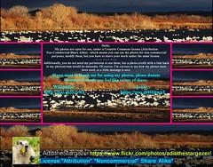 AdititheStargazer-FO-Cc-Attrib-(14708039@N08)-Flkr (malik_abdulhamid) Tags: creative commons license wikipedia sharealike attribution orto noncommercial avaaz donateto tothankme
