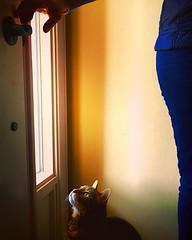 Dooooo it ... Dooooo it ... C'mon already !  Dooooo it !!!! (Jamie McCaffrey) Tags: cat feline please ottawa anticipation doorhandle pleading wantsout iphone6s