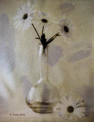 Daisies (still life) (CarlosConde/Photography) Tags: bw stilllife naturaleza film sony voigtlander 14 negative bodegn handpainted daisy watercolour margarita acuarela 58mm nokton muerta grano blanconegro virado pelcula lquida ilce7m2