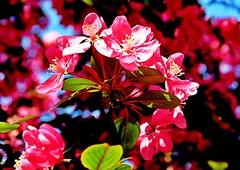 jnowak64 (jnowak64) Tags: color poland polska krakow natura makro cracow kwiaty mik wiosna malopolska przyroda bronowice drzewo krakoff