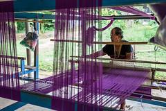 Weaver 7606 (Ursula in Aus - Away) Tags: thailand thep maehongson