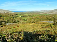 2015 The Burren - Corkscrew Hill (murphman61) Tags: road county ireland clare cows hills valley burren hillside ire gregan anclr n67 anchlir gragan angrgn