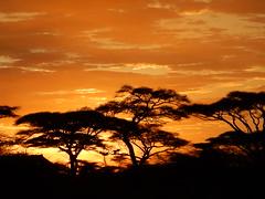Coucher de soleil, Tanzania (on Explore on May 1st, 2016) (M. Carpentier) Tags: trees sunset orange sunrise tanzania arbres coucherdesoleil leverdesoleil tanzanie