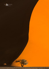 Yin & Yang (www.fourcorners.photography) Tags: sesriem sossusvlei namibrandnaukluftnationalpar dunes namibia sunset camelthorntree chiaroscuro africa sand lightshadow lightdark contrast peterboehringerphotography solitaire tsauchab fourcornersphotography