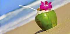Kerala-South India-coconut-water-beach (Mobile/WhatsApp:00919495509009) Tags: عين بحيرة ساحل سفر رحلة شاطئ طبيعة بحر رمال موج أمواج نهر جنوب بيئة بركة سياحة بيضاء كيرلا زرقاء شواطئ هند سواحل طقس نارجيل كيرالا سفقر أمواد كيارلا