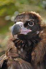 160410212 - Bianca Dekkers (pixelarized) Tags: vogel ouwehandsdierenpark monniksgier