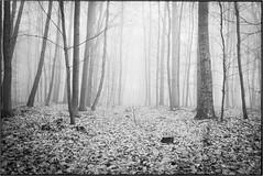 Fog (derScheuch) Tags: leica bw white black film analog kodak tmax sw analogue rodinal m6 tmax100