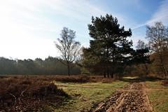 In the heather fields (M a u r i c e) Tags: trees nature netherlands grass landscape spring path heather loosdrecht efs1022mm