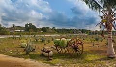 Tequila Farm (neisi85) Tags: sun tour outdoor farm tequila insel agave cozumel sonne reise mexiko canon450d haciendaantigua tamron18270 tequilafarm