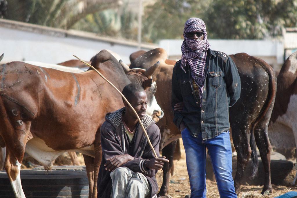 Dakar Data Nekh