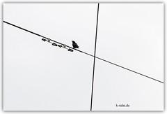 krhe (K_Rahn) Tags: seattle blue sky electric 1 washington space linie wildlife himmel wolken powerline blau aus vgel der copy overhead einsamkeit connection tier kabel krhe uns infrastruktur aussen froschperspektive draht elektrizitt ruhig aufnahme niemand einfachheit drausen horizontale sprlich
