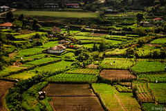Going back to the  r o o t s ! (t.e.e.j.u.s) Tags: india green landscape asia farm kerala farmland fields greenery agriculture munnar