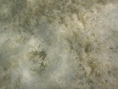 Impression in the sand (Figgles1) Tags: beach snorkel south snorkeling fremantle groyne southbeach fsc southfremantle fremantlesailingclub p1020028