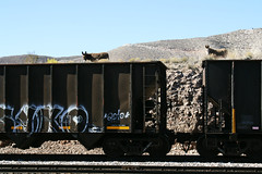 boxcar donkeys (EllenJo) Tags: railroad train donkeys january donkey az burro canonrebel boxcar freight hilltop digitalimage verdevalley 2016 clarkdalearizona ellenjo ellenjoroberts winterinarizona