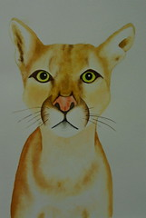 Feline, by Lourdinha - DSC02231 (Dona Minúcia) Tags: cute art beauty animal watercolor painting paper feline arte study felino beleza fofo pintura belo aquarela gracinha