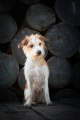 out of the dark (Maria Zielonka) Tags: winter dog germany photography fotografie hund stray straydog streuner kooiker kooikerhondje zielonka ennie giocco strasenhund