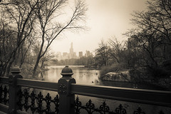 Central Park, NYC (nianci pan) Tags: park nyc newyorkcity winter urban blackandwhite bw mist lake snow plant newyork tree bird nature water rain misty fog river landscape pond centralpark manhattan sony foggy tranquility rainy serenity serene pan tranquil   sonyalphadslr  nianci sonyphotographing