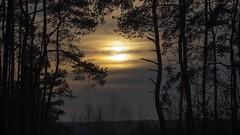 2016-02-06_07-33-10 (wiktor_furmaniak) Tags: trees sunset sky nature minolta sony silhoutte 70210mm passionphotography diamondclassphotographer absolutelyperrrfect alpha65