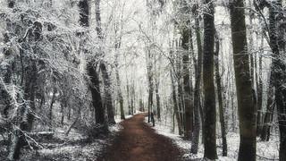 Walk through the winter wonderland