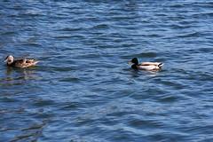 image (pirate_renee) Tags: lake bass
