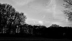 Dutch skies (Digital Adrian) Tags: sky blackandwhite white house black bird netherlands monochrome birds forest pen lens landscape four lumix key g low flock wide mini olympus screen panasonic e micro lone 17 format pancake 20 169 asph thirds mft pm1 microft