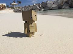(florayah) Tags: toy figurine danbo danboard
