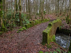 A Bridge In The Woods (Bricheno) Tags: wood bridge forest scotland village houston escocia szkocja schottland scozia renfrewshire cosse  esccia   bricheno scoia houstonwood