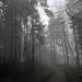 Wald im Nebel (13)