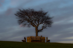 Lone Tree - Cleeve Hill, Gloucestershire. (Jeremiah Huxley Productions) Tags: england gloucestershire cheltenham cleevehill