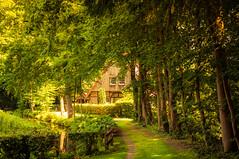 ***** (KJ Photographie) Tags: trees tree green grass misty forest germany deutschland europa wiese grn landschaft wald bume baum rasen mystisch ochtrup blumenundpflanzen nikond5000