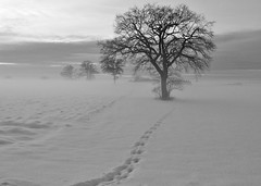 Adrian Vesa Photography (adr.vesa) Tags: trees winter bw mist snow cold tree ice fog landscapes frozen path trail nabel