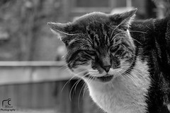 Petit chat (Mélanie Du) Tags: world life new blackandwhite cute animal cat out photography photo reflex amazing nice nikon chat photographie outdoor picture adorable like kitty pic amateur watcher d5200 nikond5200