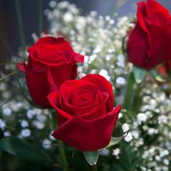 the universal antidote (** RCB **) Tags: flowers roses love amour bouquet rosen rozen liebe liefde valentinesday queenanneslace redroses  saintvalentin valentinstag  february14           lejourdelasaintvalentin
