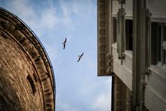 Galata Tower (Orkun Karaburun) Tags: sky bird tower fly istanbul seagul between galata manzara kule