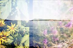 film (La fille renne) Tags: flowers wedding sea film nature analog 35mm lomo doubleexposure lomolca multipleexposure fujifilm expired mx expiredfilm 50mmf17 minoltasrt303b fujic100 lafillerenne alexcetera
