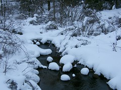 Snow Covered Stream