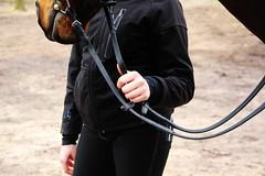 2016 Horses-Hunting (Steenvoorde Leen - 3.4 ml views) Tags: maarsbergen doorn utrechtseheuvelrug 2016 landgoed netherlands pferde paarden springen huntertrails hunt jachtpaard jachtvereiging cross horse horses hindernis fench jumping reiten jägerwnderwege cheval