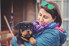 Rottweiler Kennel dei Cavalieri dell'Apocalisse (Elisa Gabbrielleschi) Tags: hello dog gabriel dogs cane 50mm photo puppies nikon rottweiler bella elisa 2016 cuccioli d7100 gabbrielleschi helloelisagabriel