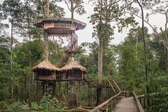 Amazonian House (Jairo Pez) Tags: house tree canon arbol rebel casa colombia selva jungle postcards amazonas t3i jairo paez 600d postard