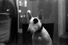 (Alexandru Paraschiv) Tags: trip blackandwhite dog film animal 35mm bull terrier bullterrier mydog
