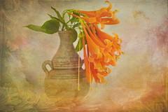 Flame Vine Flower (ulli_p) Tags: flowers light stilllife orange flower art texture nature colors thailand asia southeastasia colours vine textured isan likeapainting amazingcolours aworkofart flickraward texturedphoto ruralthailand awardtree artofimages exoticimage canoneoskissx5 flamevineflower
