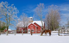 after snow storm (explored)  (JulyRiver) Tags: blue red sky horse white storm beauty sunshine boston farm newengland redhouse aprilsnow aprilshower