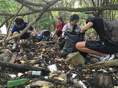 22-Env&CivSoc-World-Water-Day-LCK-Cleanup-26Mar16 (Habitatnews) Tags: mangrove capt nus worldwaterday limchukang iccs