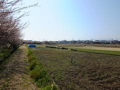 16i5277 (kimagurenote) Tags: apricot ume  japaneseapricot  prunusmume sogabairin   odawarakanagawa