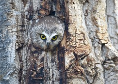 eyes of the tree (brodmann's 17) Tags: