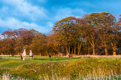 Alpacas may safely graze (Gerry Lynch) Tags: england unitedkingdom gb salisbury wiltshire clarendonpalace