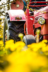 IMG_8722.jpg (vossemer) Tags: de deutschland jahreszeiten natur pflanzen blumen verkehr traktoren frhling blten trecker niedersachsen lwenzahn jork frhjahr