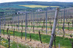 Wie prachtvoll zeigt sich die Natur (amras_de) Tags: bag vineyard wiesbaden via vinha vignoble vie weinberg freudenberg wijngaard frauenstein vigneto weinberge vinograd dotzheim vinice winnica vingrd vinyal vinohrad viinitila vinyar vinhal vitejo viinapuuistandik