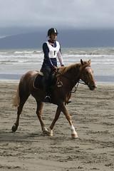 IMG_EOS 7D Mark II201604032383 (David F-I) Tags: horse equestrian horseback horseriding trailriding trailride ctr tehapua watrc wellingtonareatrailridingclub competitivetrailriding sporthorse equestriansport competitivetrailride april2016 tehapua2016 tehapuaapril2016 watrctehapuaapril2016
