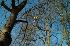 Knospe Frhling (rieblinga) Tags: blte bltter baum frhling knospe